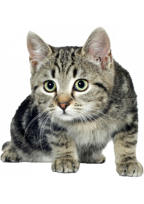 North Paw для кошек